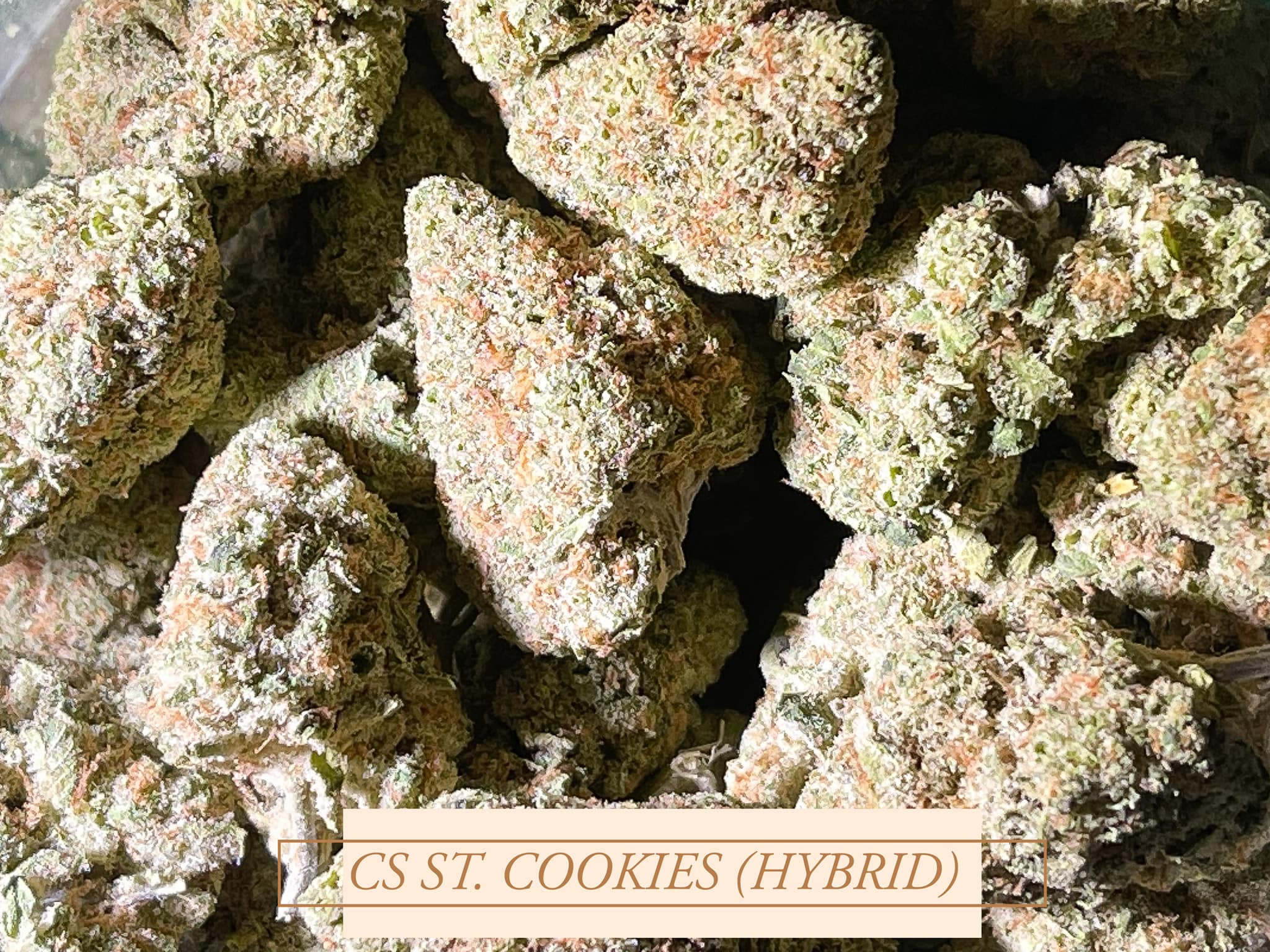 CS ST Cookies Hybrid Copperstate farms Suzy Tracy