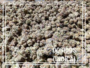 Dosidos Indica October 6 2021 strain