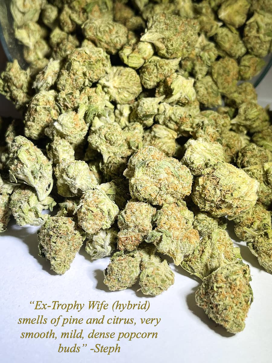 Ex Trophy Wife Hybrid strain picture