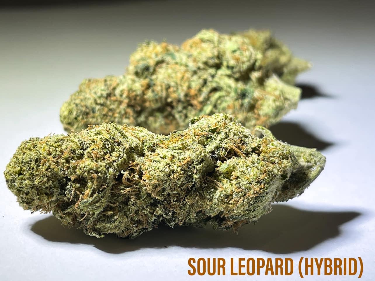 Hybrid strain Sour Leopard
