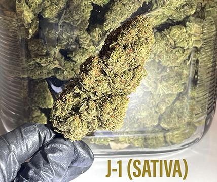 J-1 SATIVA long buds, high energy strain