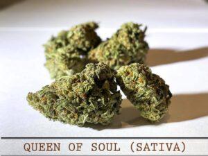 Queen of Soul Sativa Strain