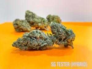 SG Tester Hybrid Sunday Goods strain