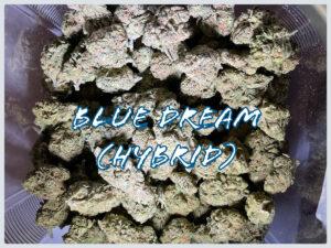 blue dream hybrid Suzy Tracy Marketing cannabis photography